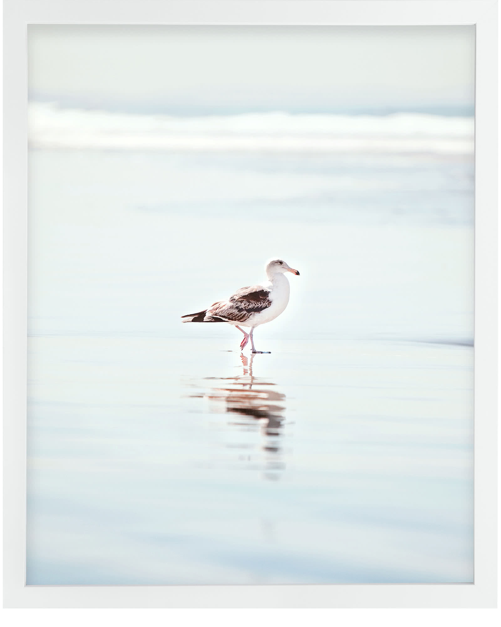 """Gentle Seabird"" by Stephanie Sherman,"