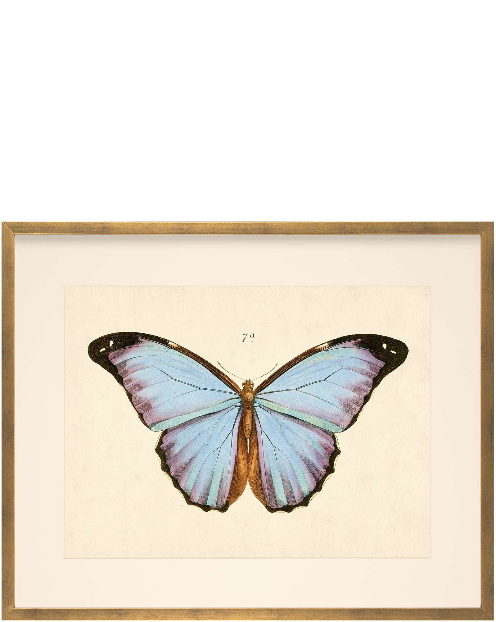 Butterfly 7a  by Whalebone Creek Prints,