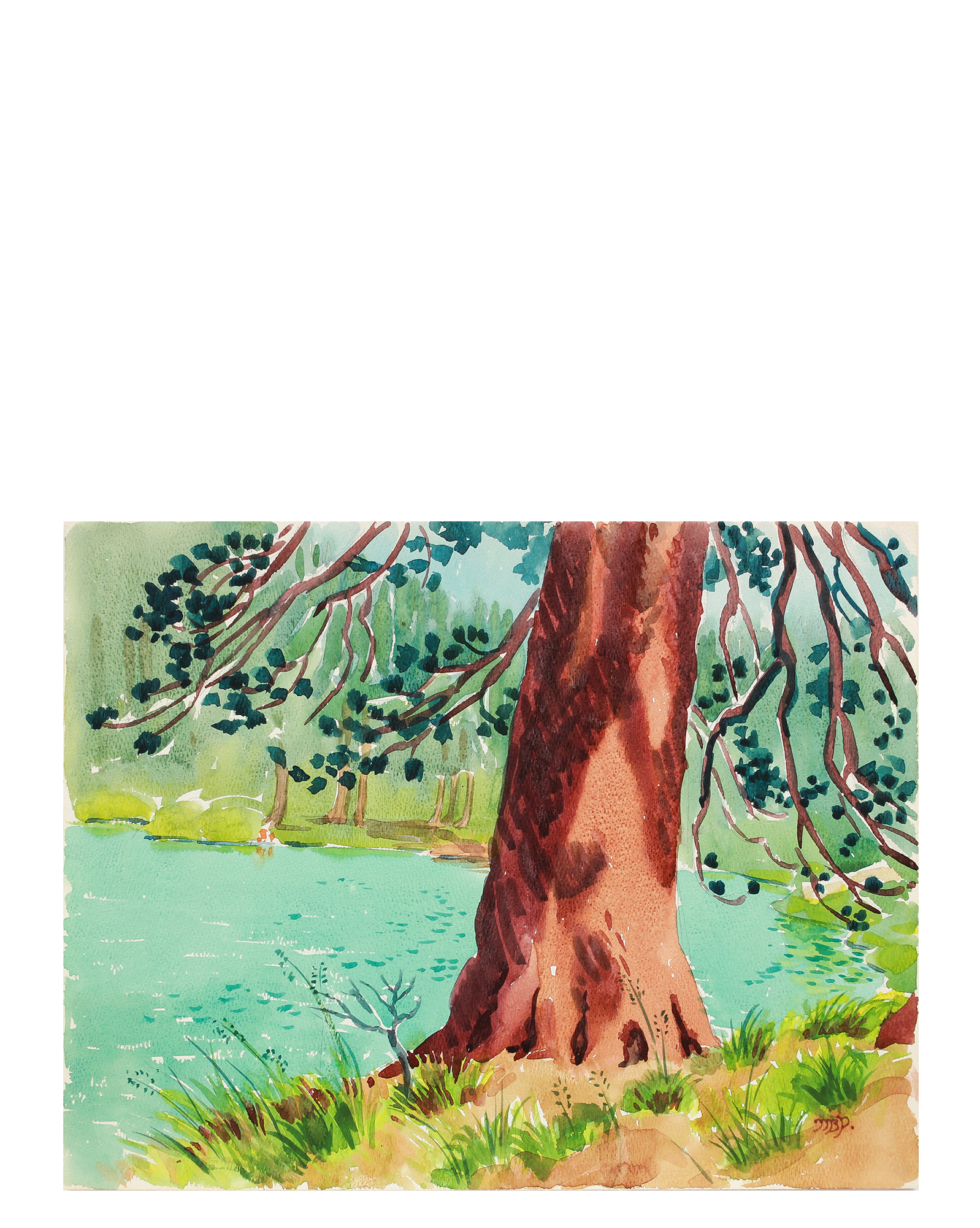 """""""Pine at Lake Gilmore"""" by Mary Pomeroy,"""