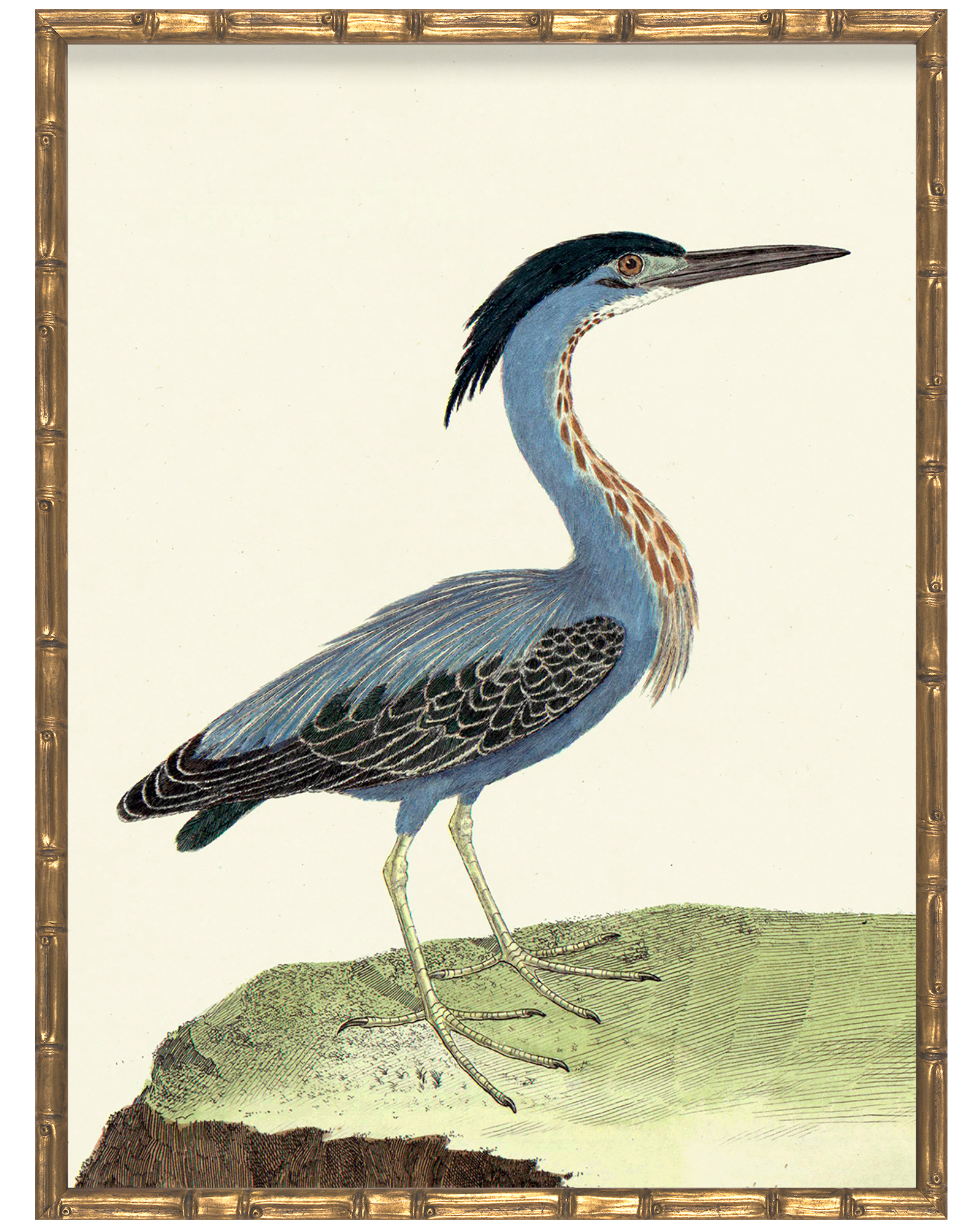 Vintage Bird VII in Bamboo Frame  by Whalebone Creek Prints,