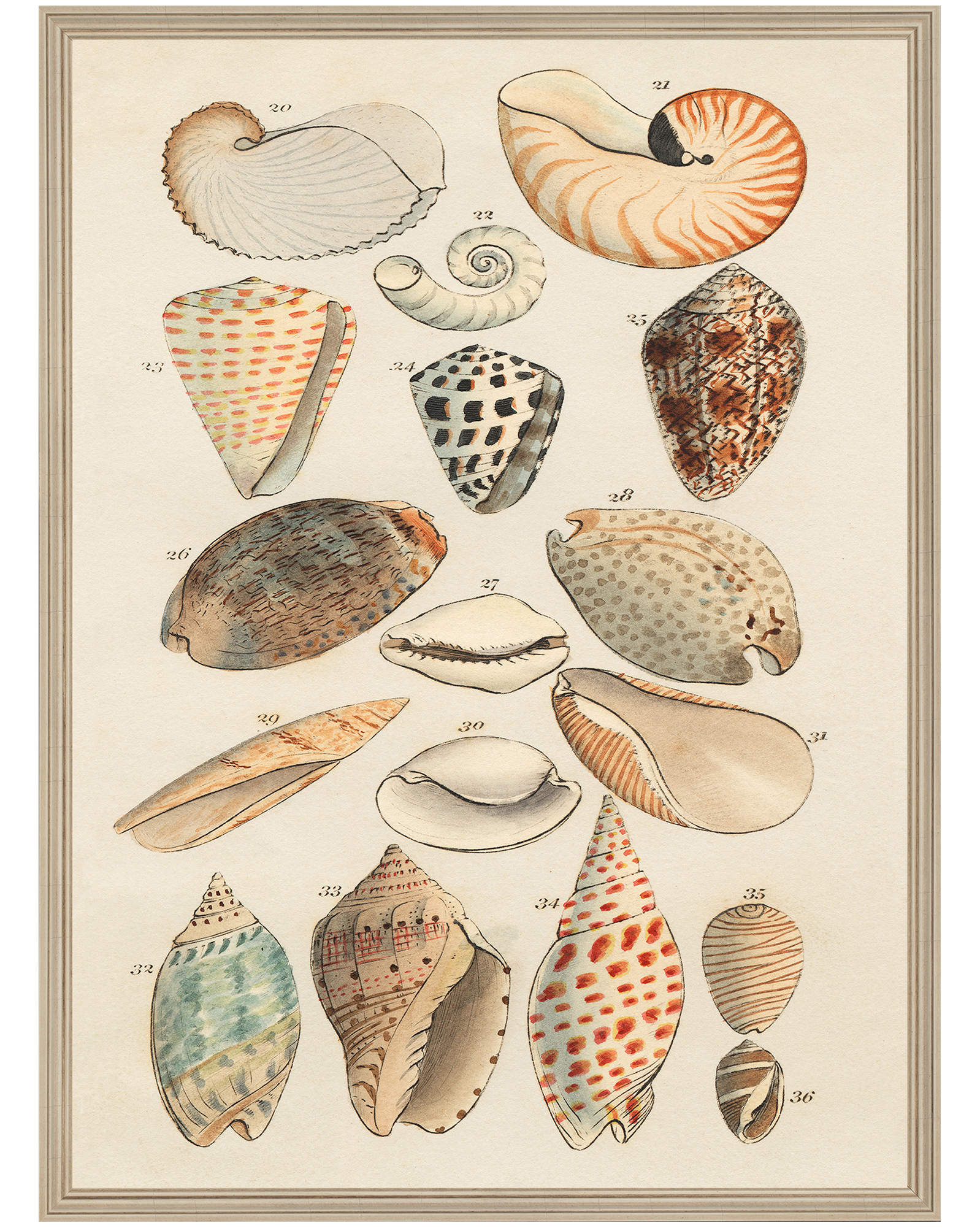 """Shell Collection"" by Whalebone Creek Prints,"