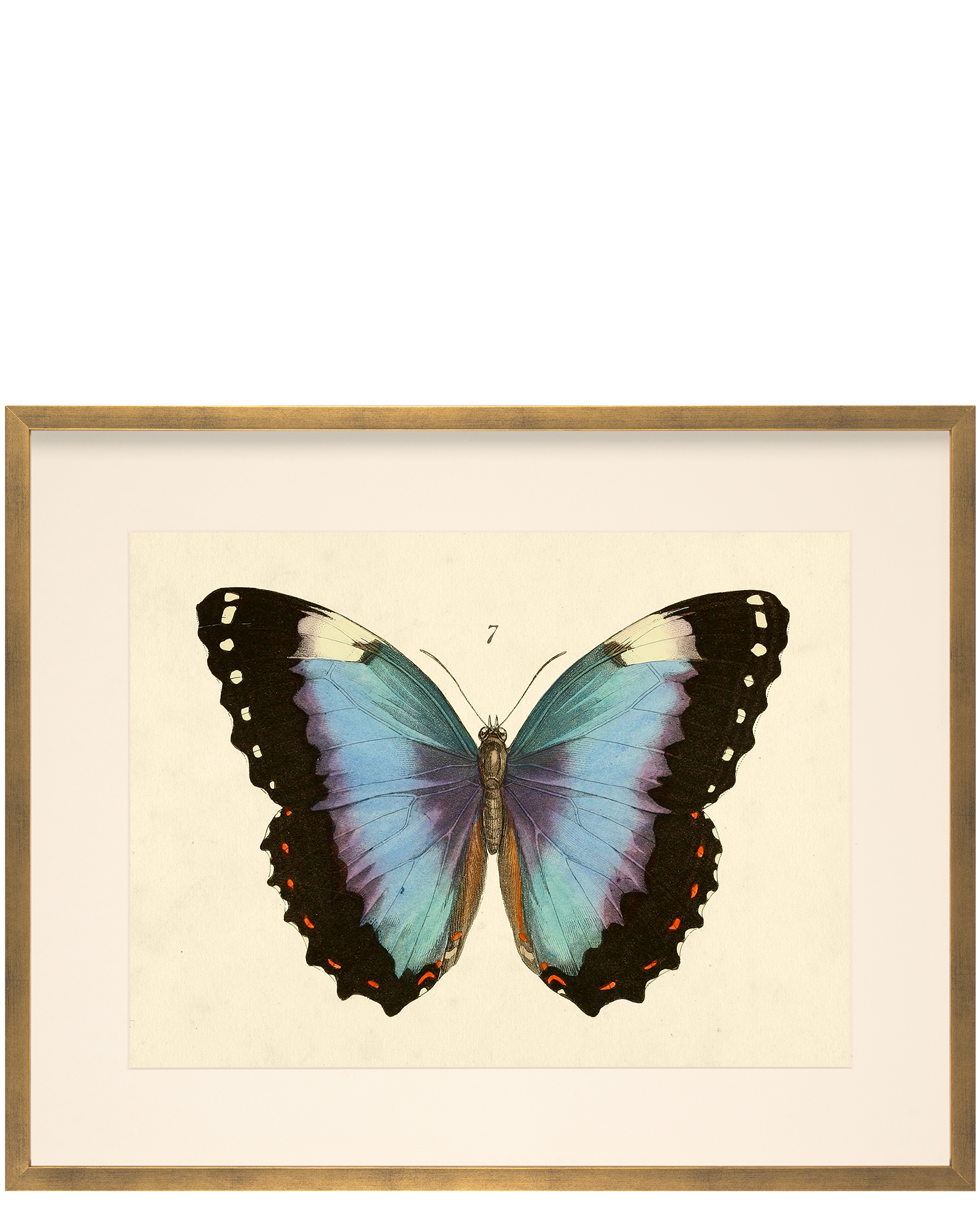 Butterfly 7 by Whalebone Creek Prints,