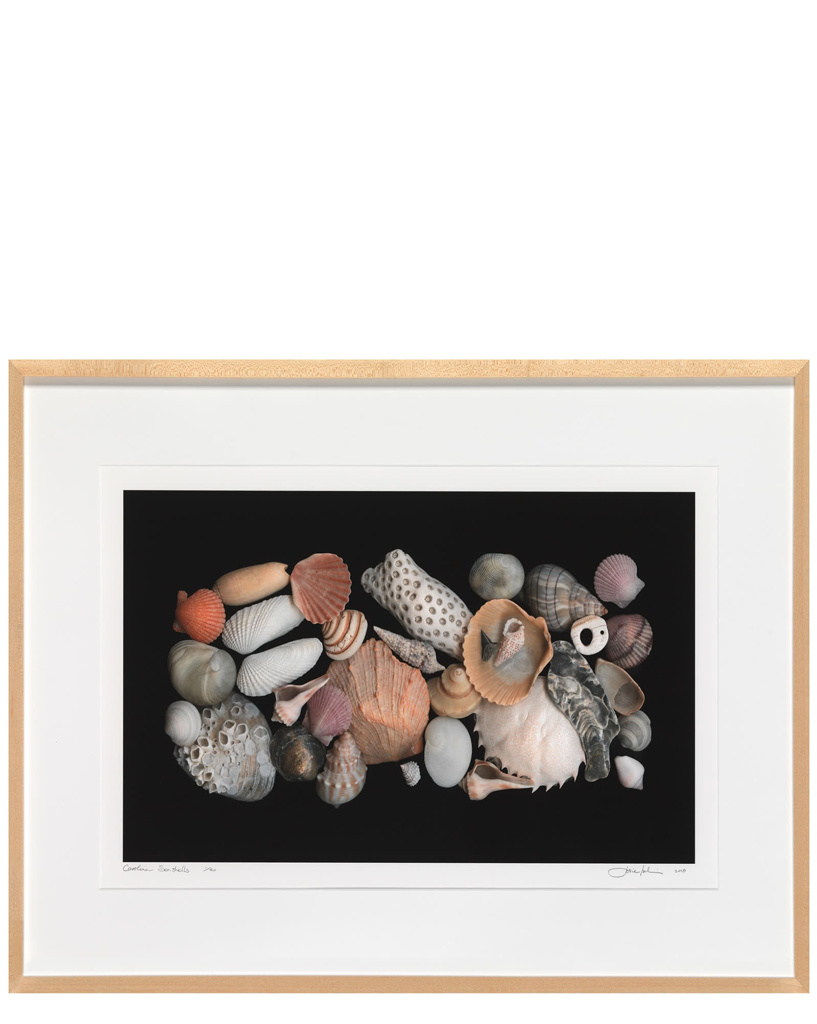 """Carolina Seashells"" by Josie Iselin,"