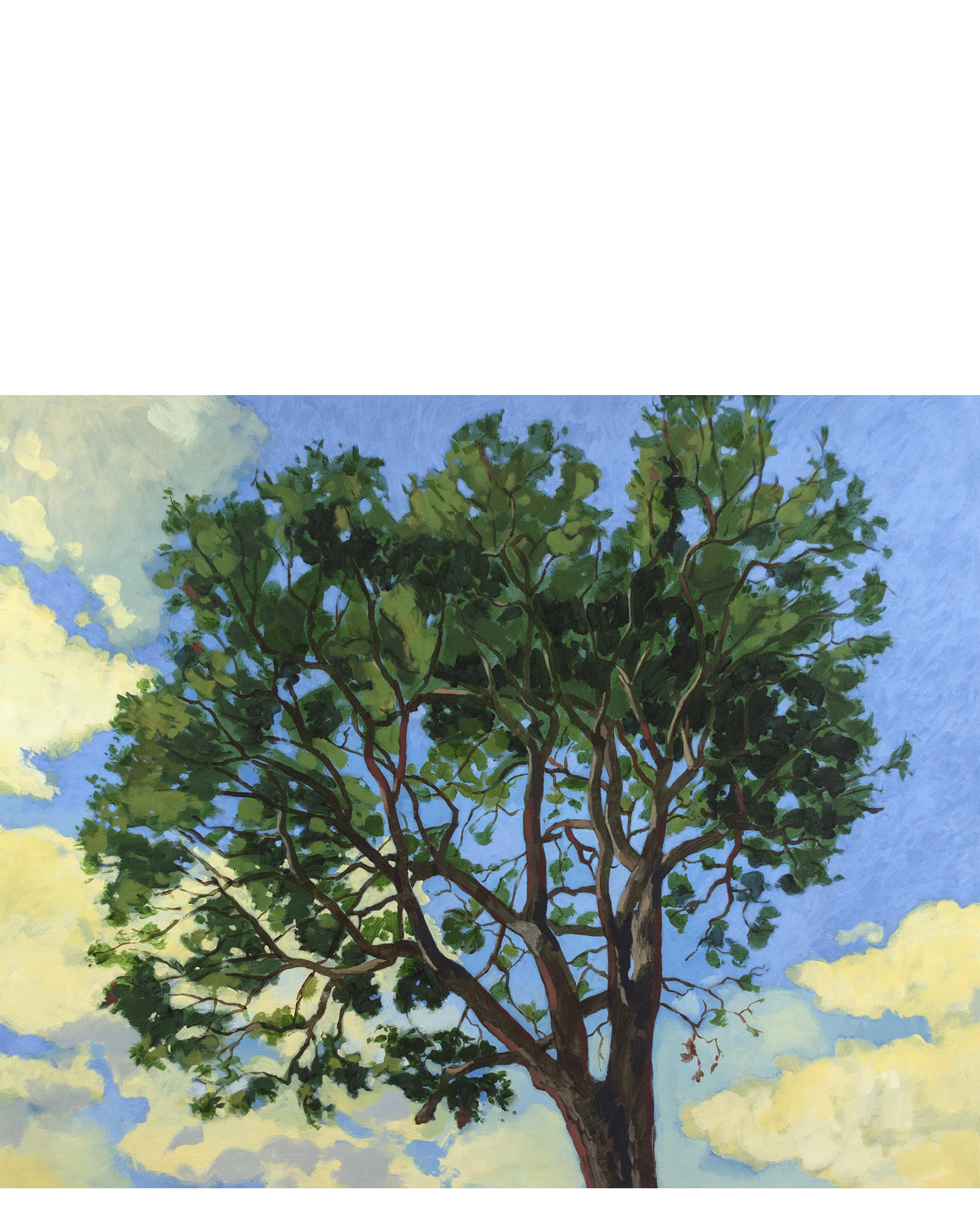 """Tall Tree"" by Jeremy Thornton,"