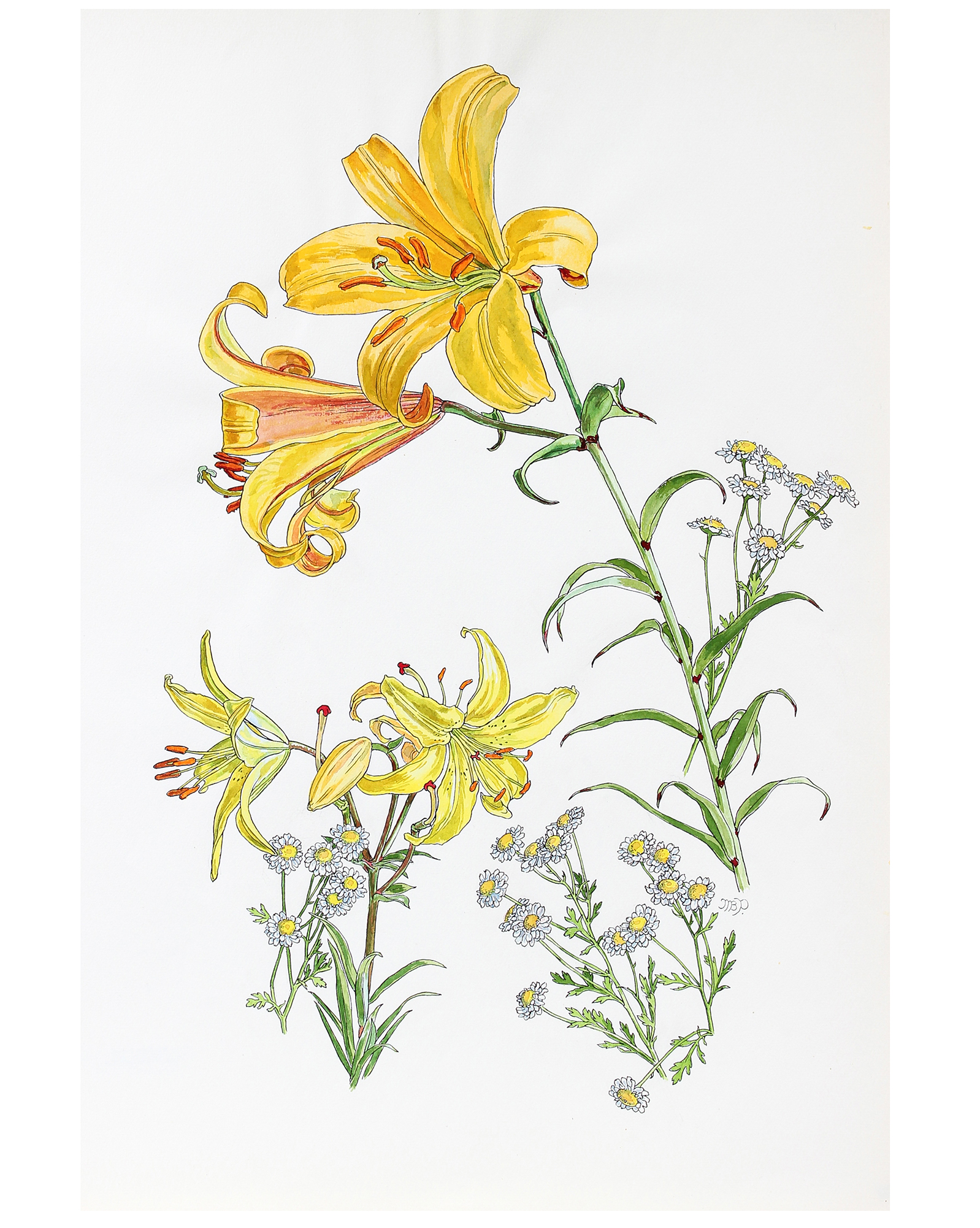 """Lily and Composite Study"" by Mary Pomeroy,"